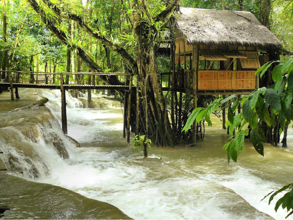 Waterfall Tree House